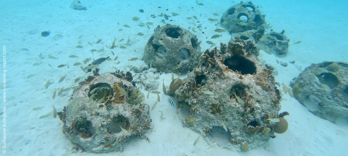 Artificial reefs in Curacao