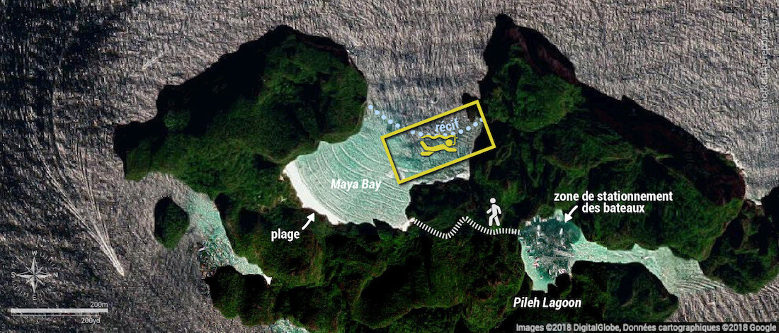 Carte snorkeling à Maya Bay, Koh Phi Phi, Thaïlande