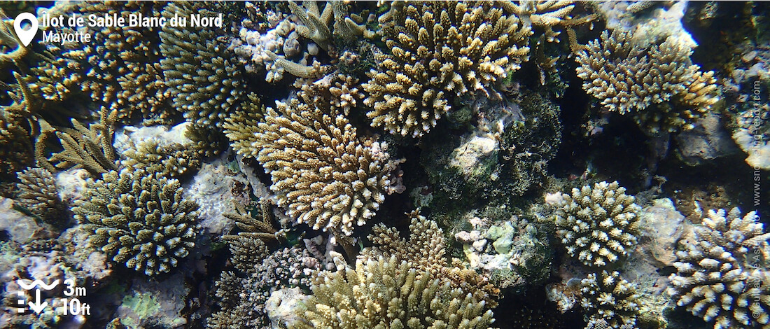 Coral at Ilot de Sable Blanc du Nord, Mayotte