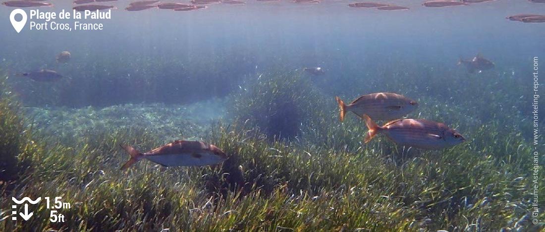 Underwater landscape at Plage de la Palud, Port Cros