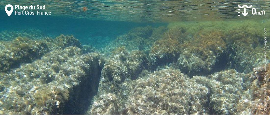 Fonds rocheux à la plage du Sud, Port Cros