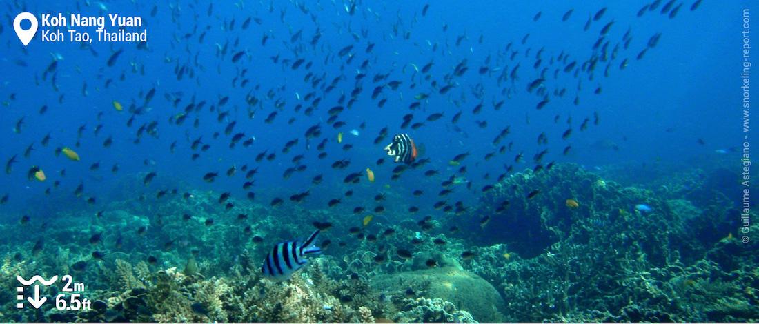 Koh Nang Yuan coral reef