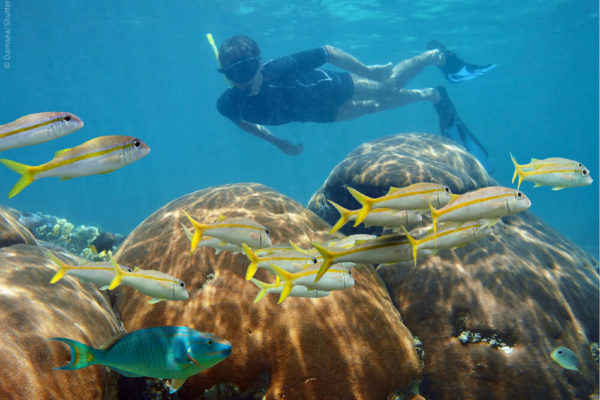 Best coral reefs for snorkeling