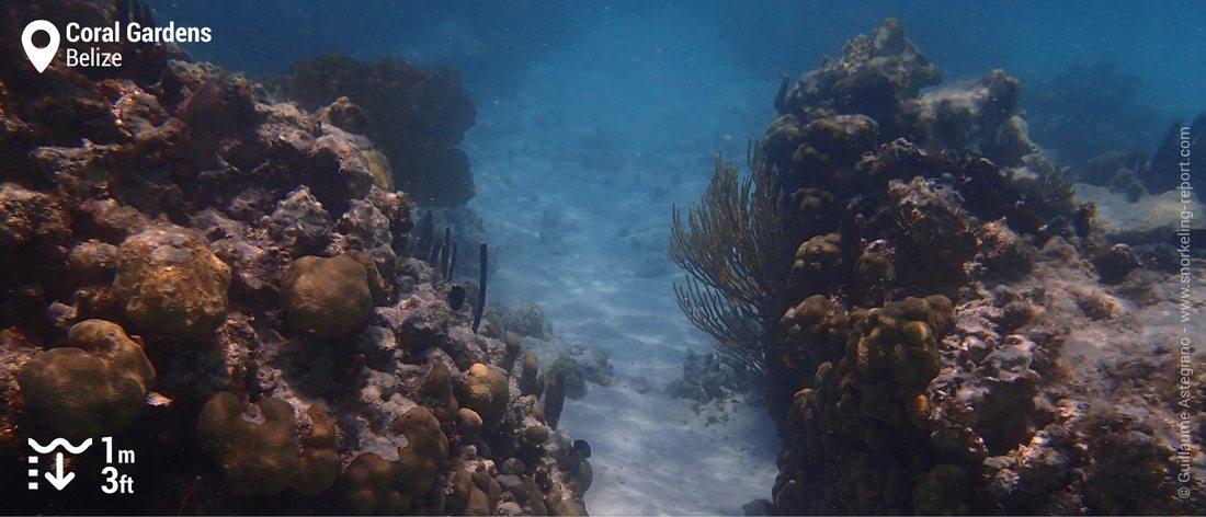Récif corallien au Coral Garden, San Pedro