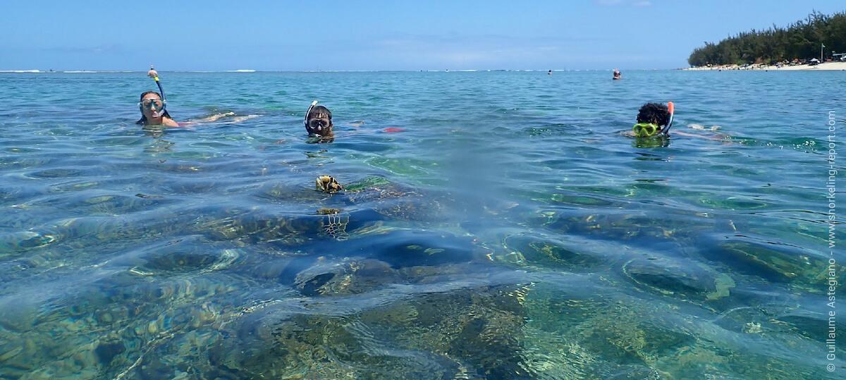 Sea turtle Reunion Island