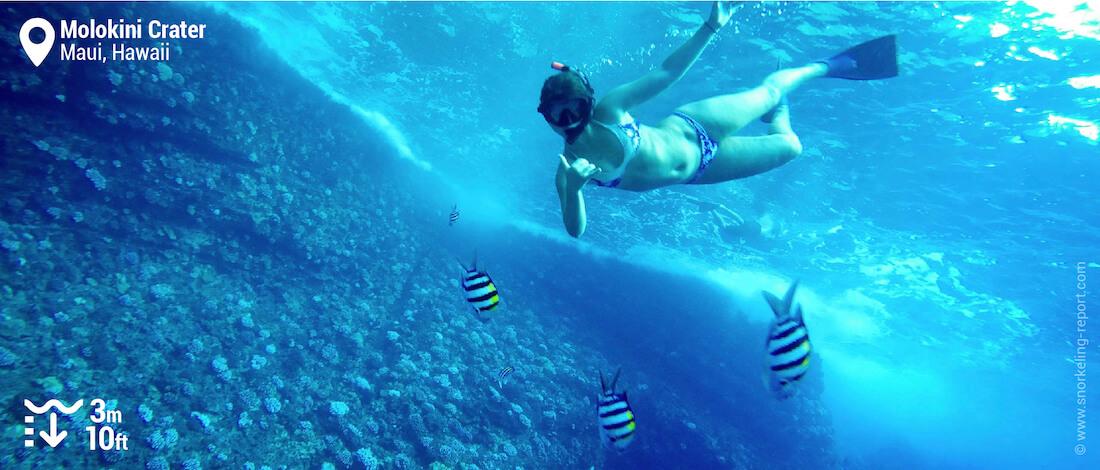 Snorkeler at Molokini Atoll
