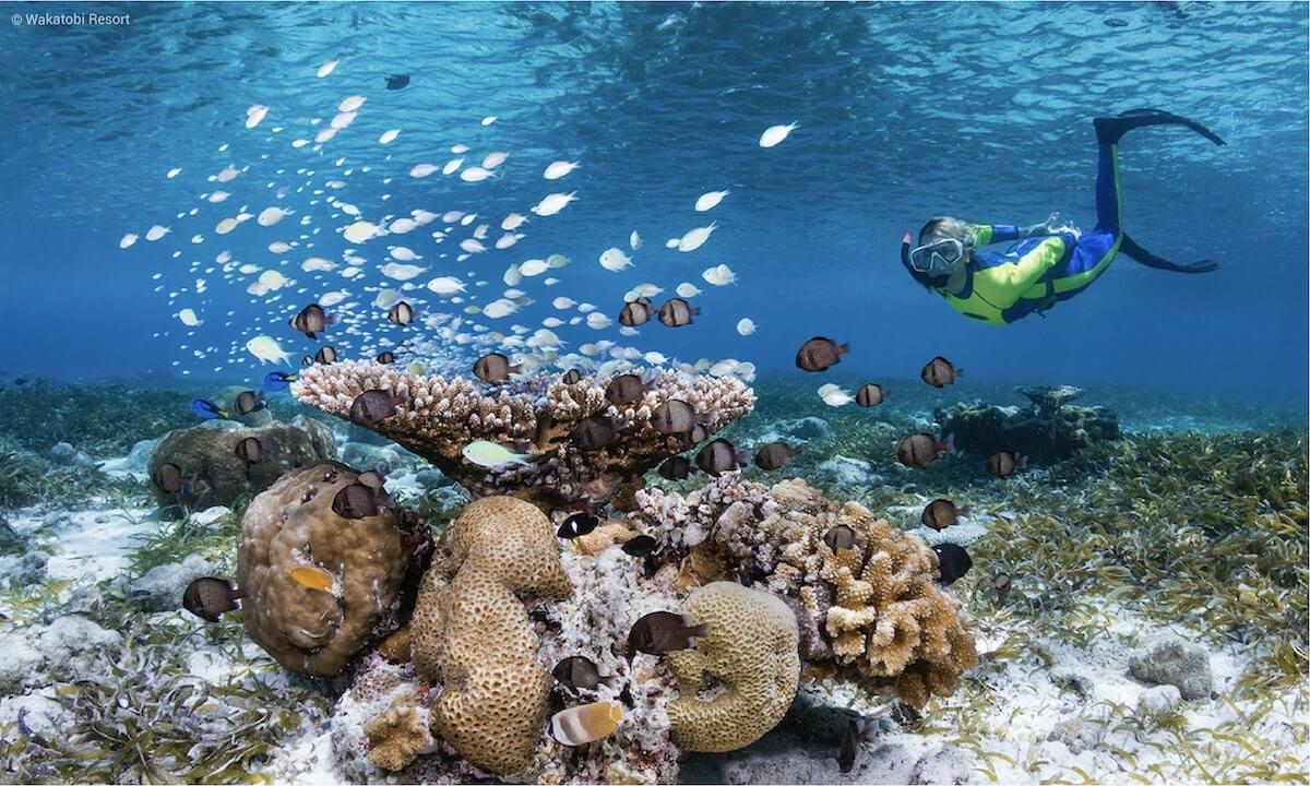 Snorkeler at Wakatobi House Heef