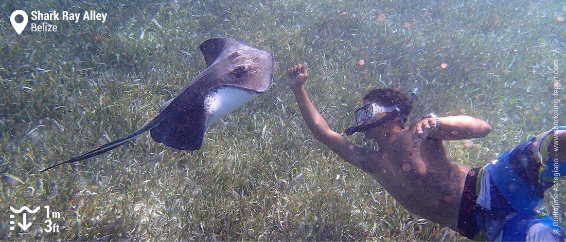 Snorkeling avec une raie pastenague à Shark Ray Alley