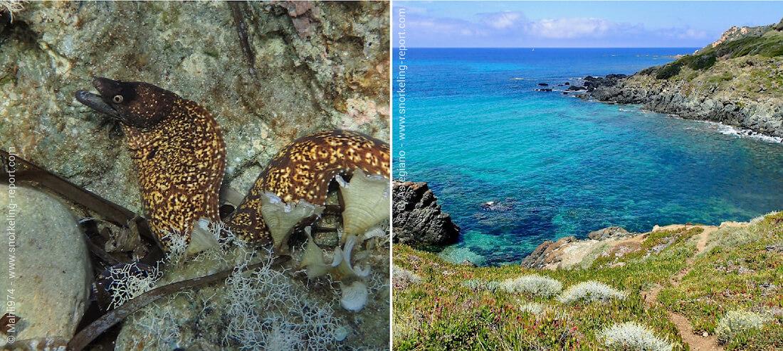 Snorkeling sur la côte rocheuse de la Corse