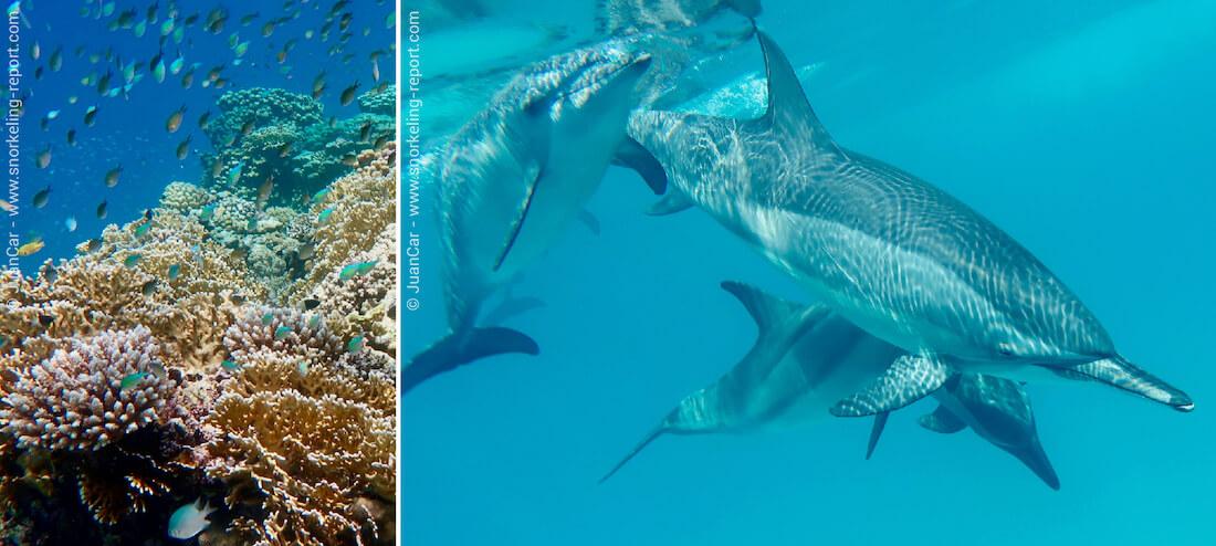 Snorkeling avec des dauphins à Marsa Alam