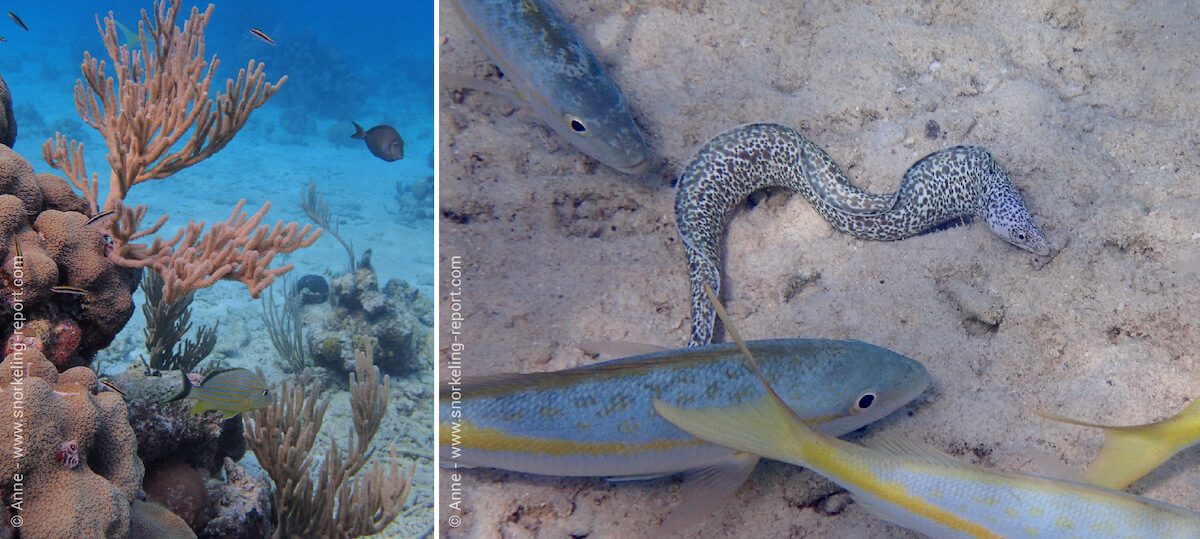 Punta Perdiz boasts beautiful coral beds and a varied underwater life