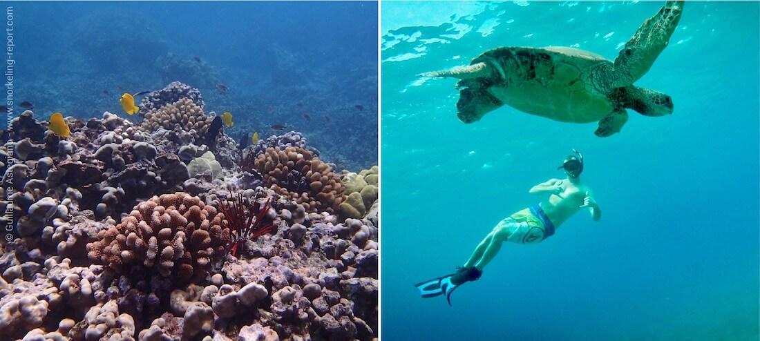 Snorkeling Maui