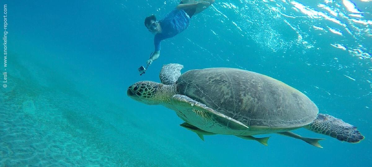 Snorkeling with sea turt