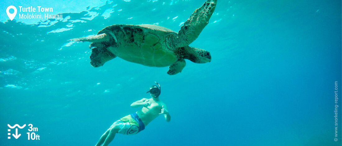 Snorkeling with sea turtles at Turtle Town, Maui
