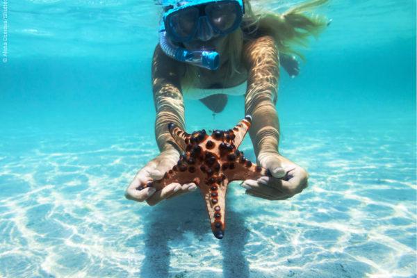 Snorkeling avec des étoiles de mer