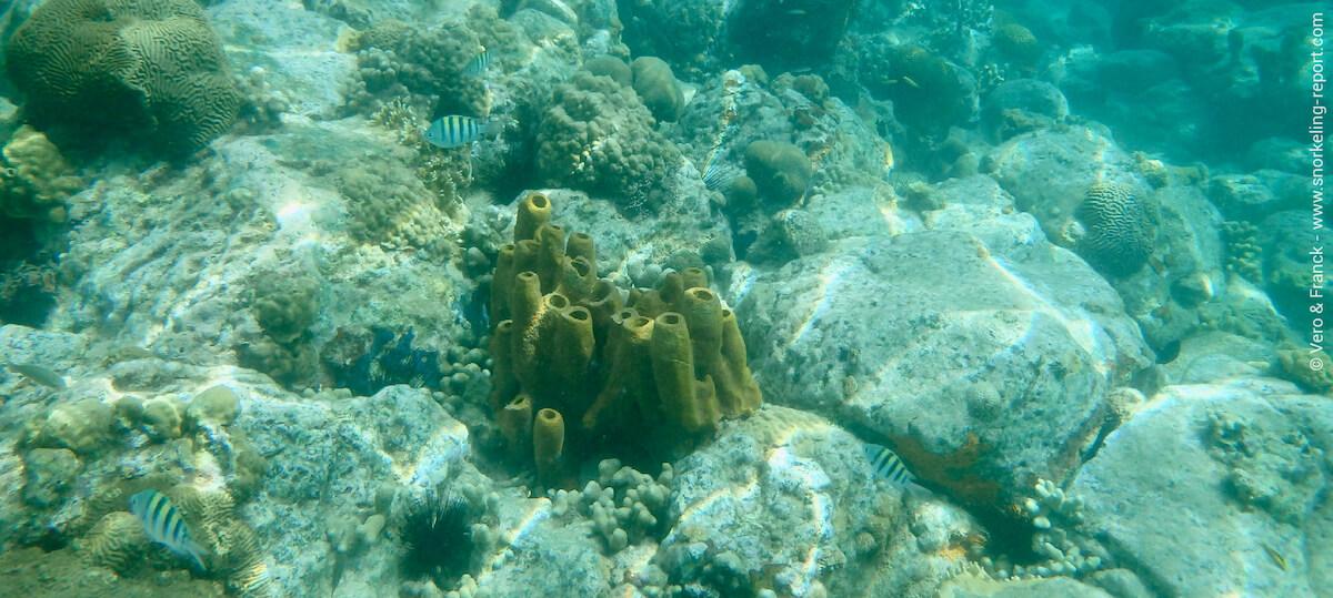 Fonds marins de l'Anse Figuier