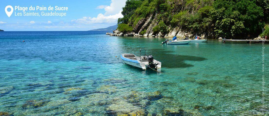 Snorkeling dans la baie du Pain de Sucre, Les Saintes, Guadeloupe
