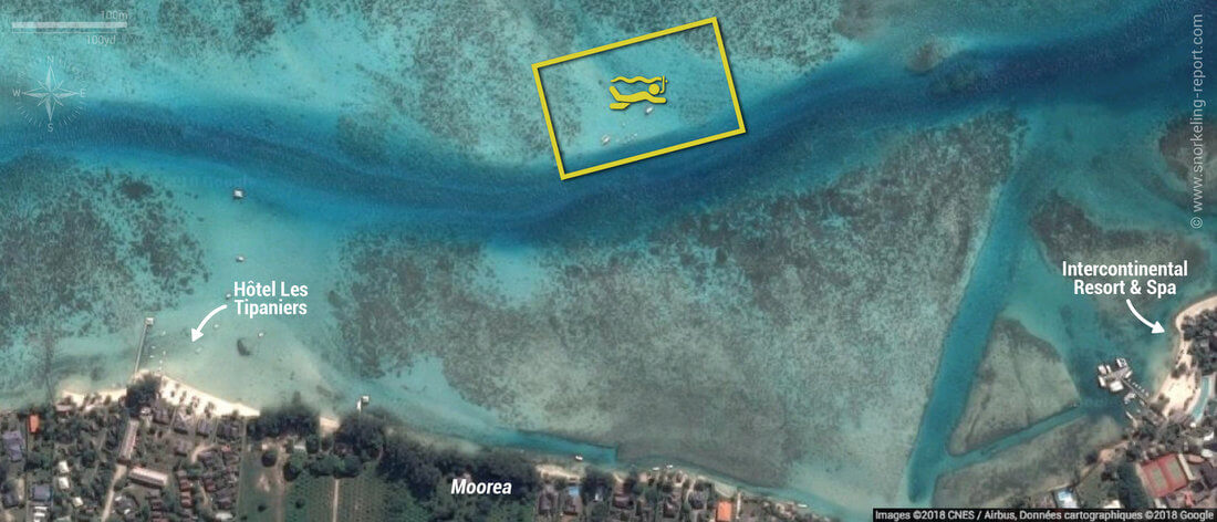 Carte snorkeling à Sharks City, Moorea