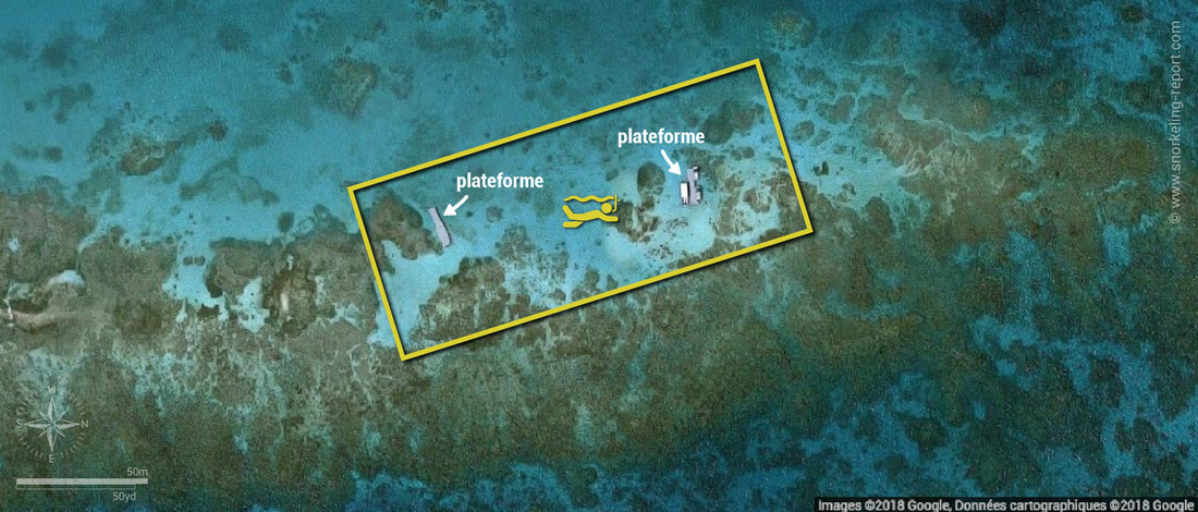 Carte snorkeling à Stingray City, Antigua