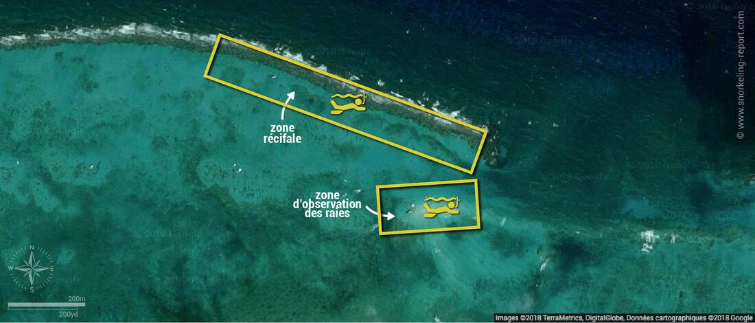 Carte snorkeling à Stingray City, Îles Caïmans