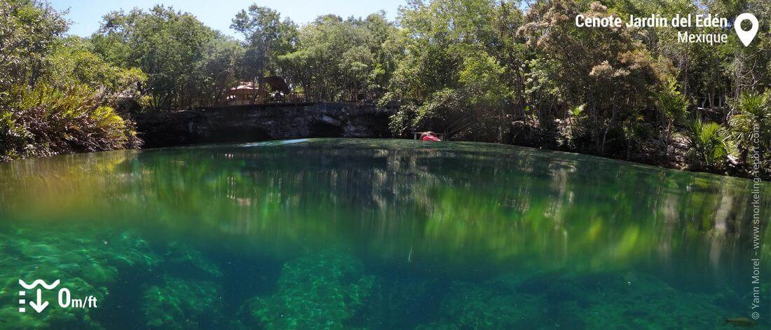 Le cenote Jardin del Eden, Mexique