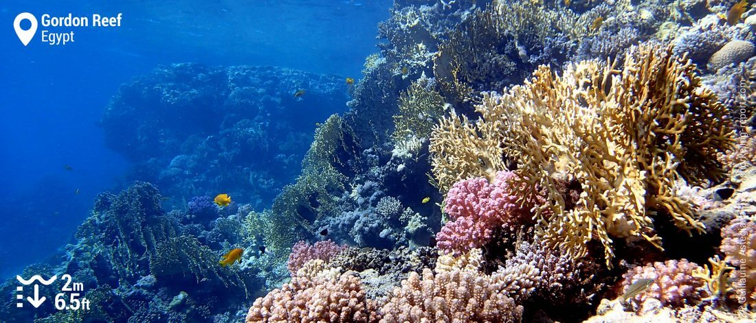 Coral reef at Gordon Reef, Red Sea