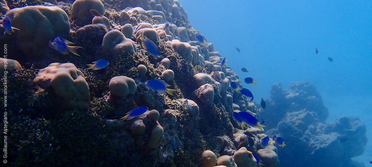 récif corallien à la Ferme Perlière de Tikehau