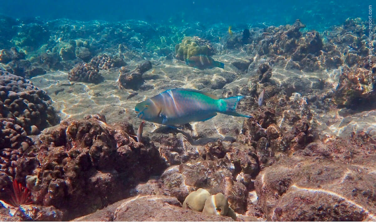 Coral reef at Kahaluu
