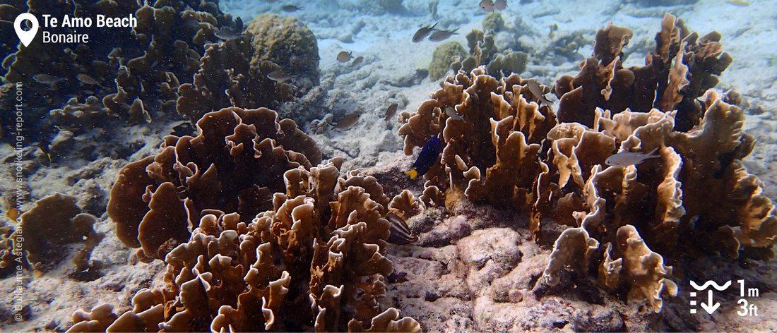 Te Amo Beach coral reef