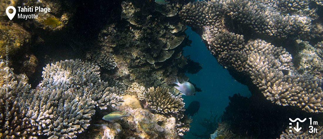 Récif corallien à Tahiti Plage, Mayotte
