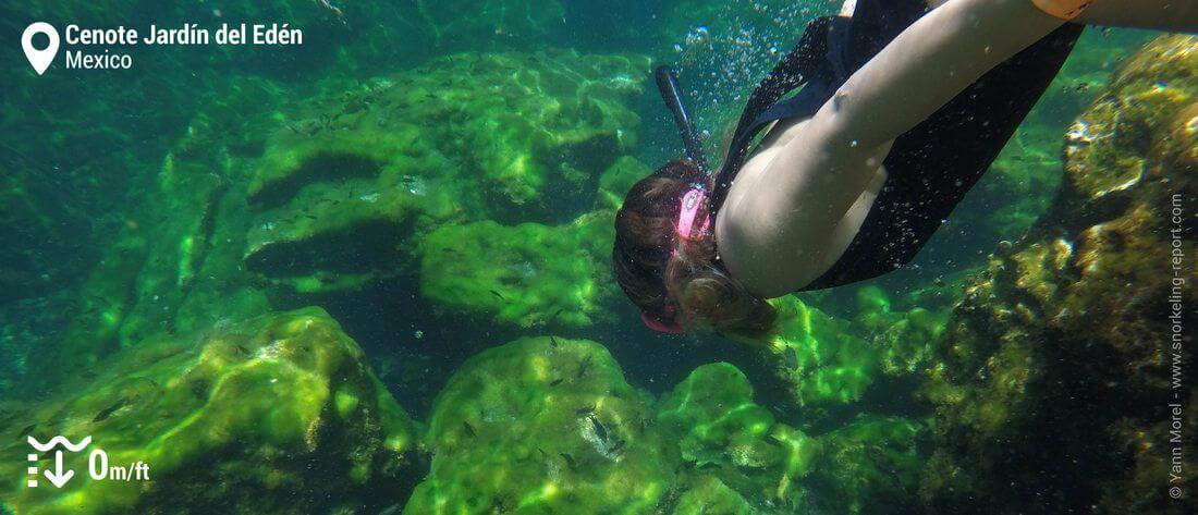 Freediver in the Cenote Jardin del Eden, Mexico