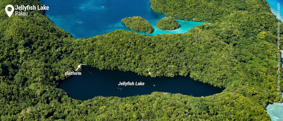 View on Jellyfish Lake, Palau snorkeling