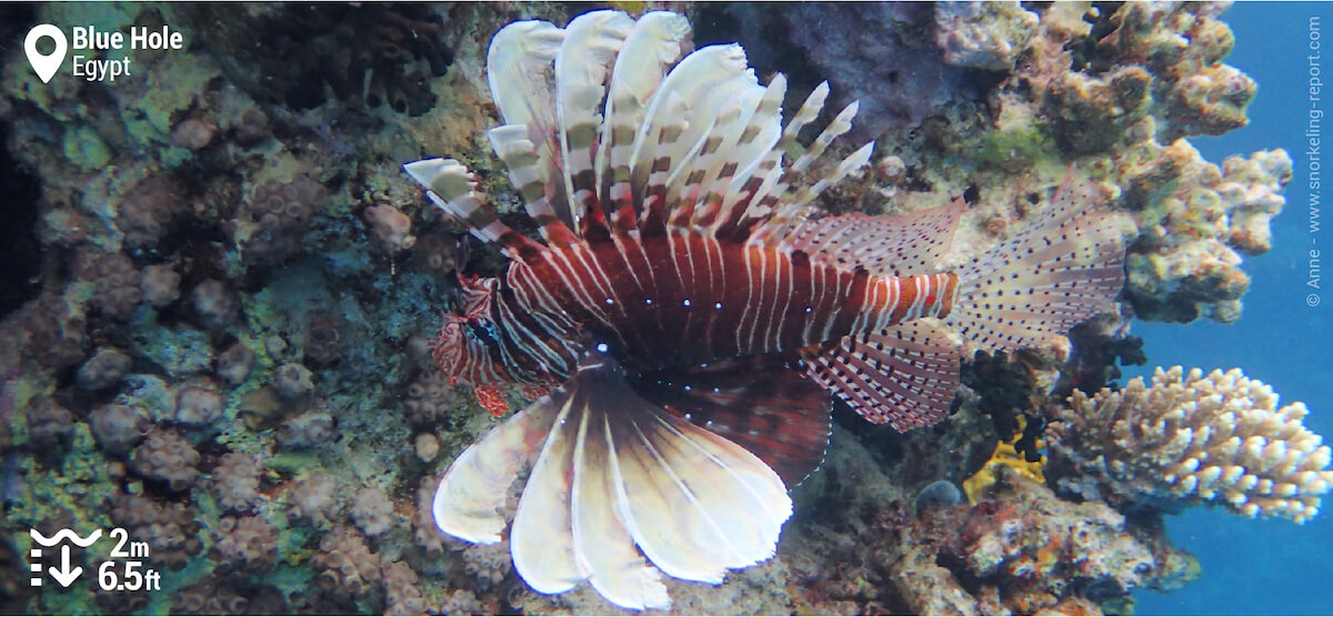 Lionfish in Blue Hole