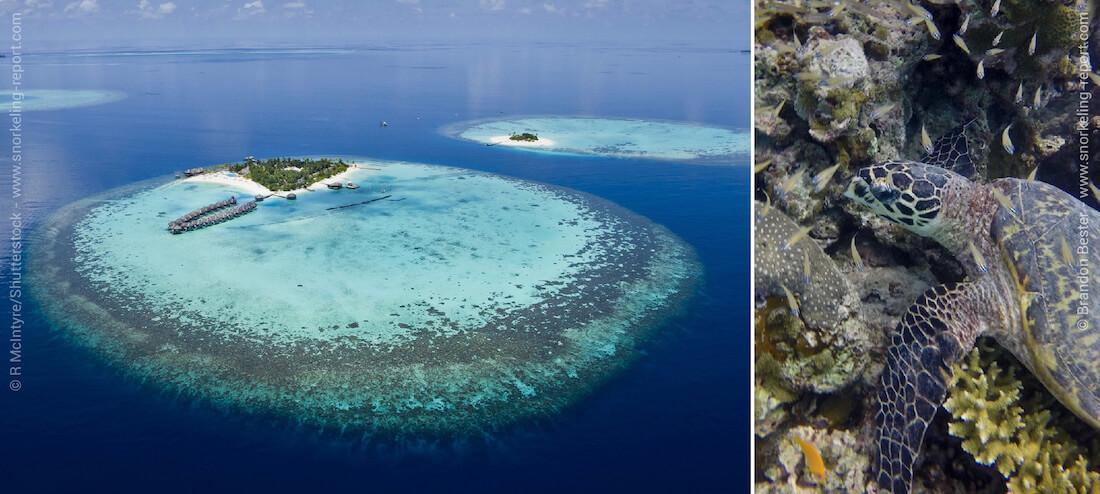 Snorkeling dans les atolls et îles-hôtels des Maldives