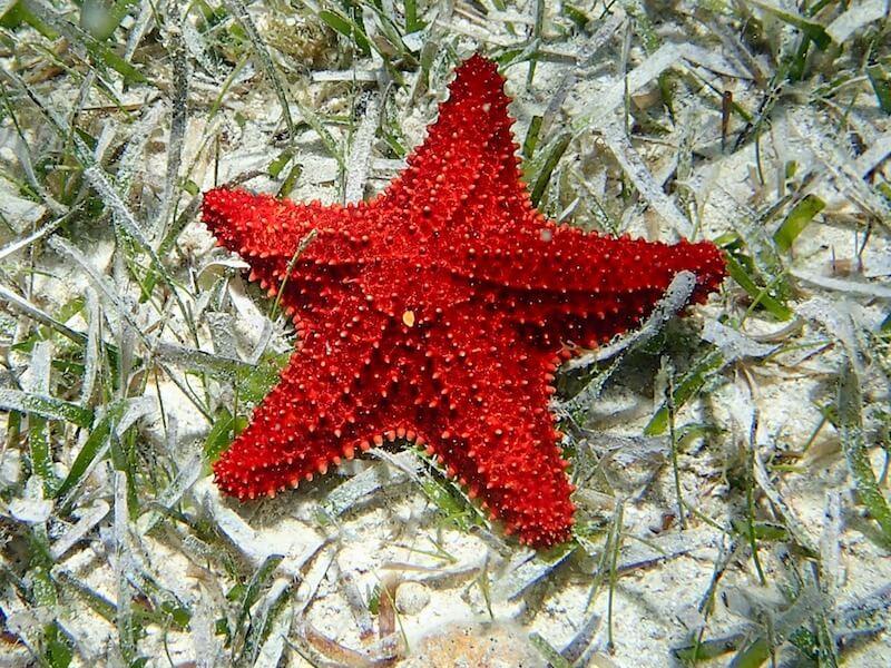 Snorkeling Starfish Alley | Roatan | Honduras