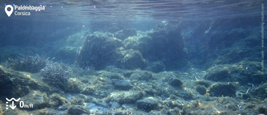 Rocky seabed in Palombaggia