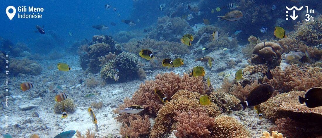 Récif et poissons-papillons à Gili Meno