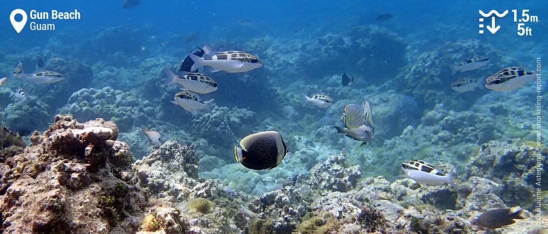 Snorkeling sur le récif de Gun Beach, Guam