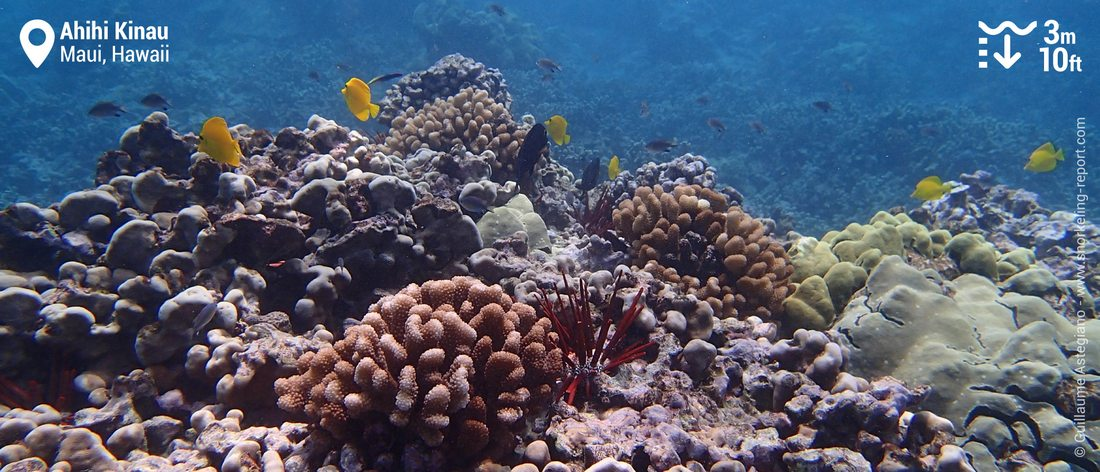 Récif corallien à Ahihi Kinau, Maui