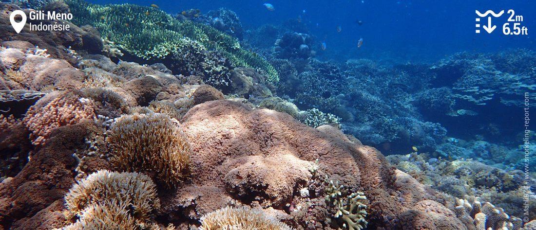 Récif corallien à Gili Meno, Indonésie