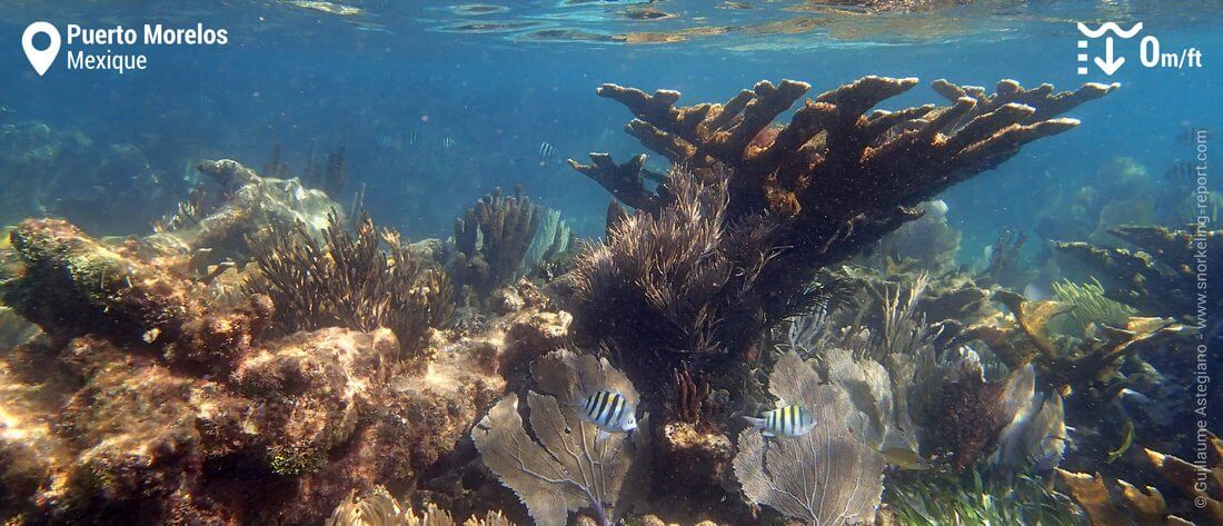 Récif corallien à Puerto Morelos, Mexique