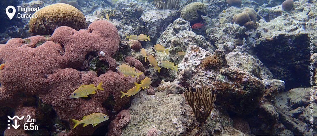 Récif corallien au Tugboat, Curaçao