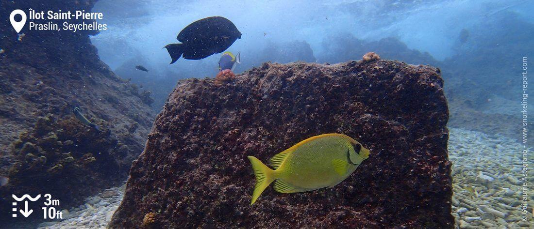 Snorkeling à l'îlot Saint-Pierre, Seychelles