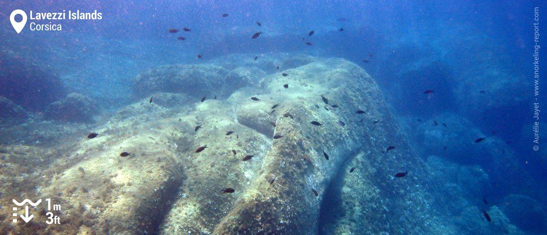 Rocky seabed - Lavezzi Islands snorkeling
