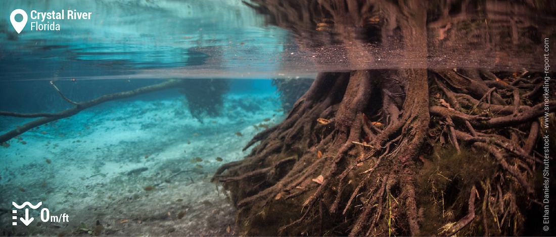 Underwater landscape at Crystal River, Florida