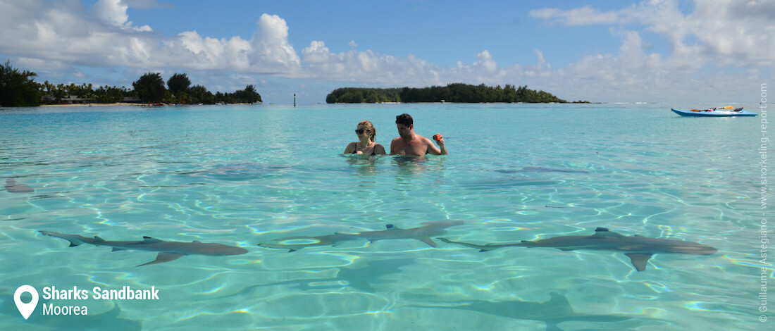 Snorkeling at Sharks Sandbank, Moorea