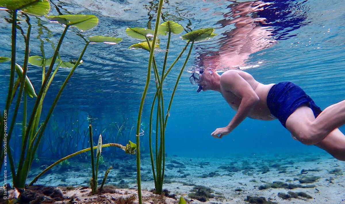 Snorkeling in Alexander Springs