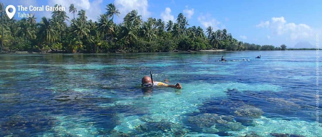 Snorkeling the Coral Garden, Tahaa