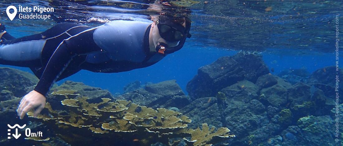 Snorkeling au-dessus de coraux corne d'élan aux îlets Pigeon