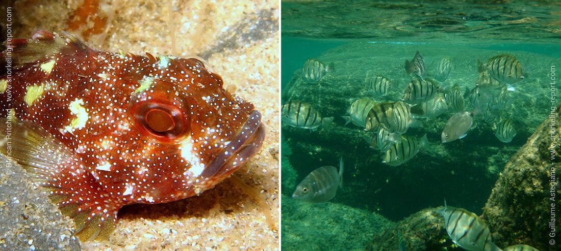 Snorkeling en Afrique du Sud